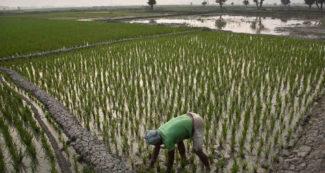 'सीमांत किसानों के लिए 6000 रुपए सालाना का कितना महत्व है, ये बात बुद्धिजीवी नहीं समझ पाएंगे'