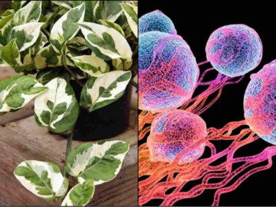 कैंसर के लिए जिम्मेदार प्रदूषण कणों से बचाएगा घर में लगा ये पौधा, कीमत होगी बस इतनी सी