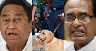मध्यप्रदेश में कुत्तों का तबादला आया सुर्खियों में, बीजेपी ने कमलनाथ सरकार को घेरा
