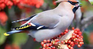 'पंछीफल' के बारे में बहुत जरूरी जानकारी, डॉक्टर्स कहते हैं 'खाना चाहिए'