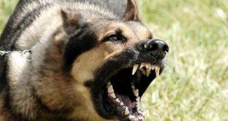 First Aid: अगर कुत्ता काट ले तो ये 4 काम तुरंत करने चाहिए
