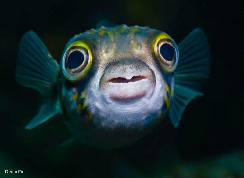 लॉकडाउन में हो गया कमाल, 50 साल बाद गंगा में ऐसा बदलाव, लौटीं 7 प्रजाति की मछलियां