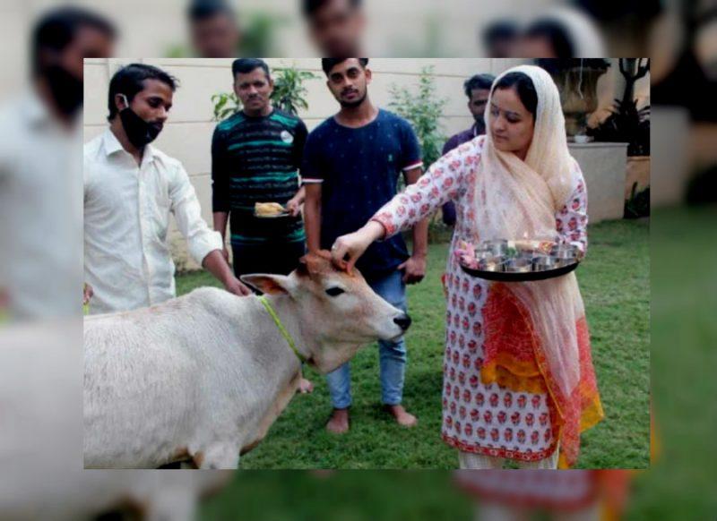मुलायम की छोटी बहू अपर्णा यादव त्यौहारों पर कुछ इस अंदाज में आईं नजर, गोवर्धन पर गाय की पूजा की