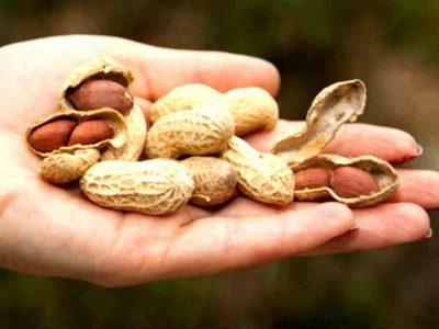 सर्दियों में जरूर खाएं मूंगफली, कहलाती है ब्रेन फूड, जानें ये जबरदस्त फायदे