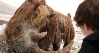 साइबेरिया में पिघली बर्फ तो मिला 40 हजार साल पुराना बालों वाला गैंडा, फोटोज